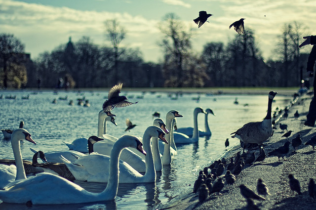 'Feeding Birds at Kensington Gardens' by Michiel Jelijs available at http://www.flickr.com/photos/thewolf/4203584686/under a Creative Commons Attribution 3.0. Full terms at http://creativecommons.org/licenses/by/3.0/
