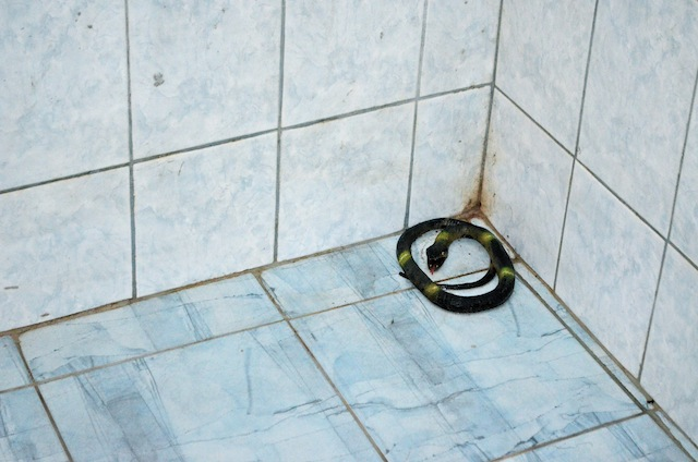 The Shower Snake