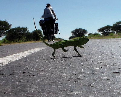 Derek Cycling Past a Chameleon